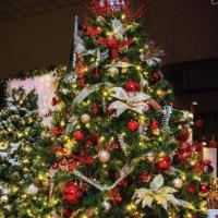 PeaceofMind-Tree13SA.jpg